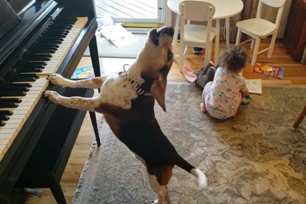 Σκύλος παίζει στο πιάνο και το κοριτσάκι χορεύει - Το βίντεο που έχει σαρώσει με 13.023.787 προβολές