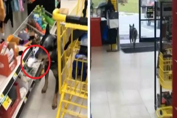 Σκύλος φεύγει ανενόχλητος από pet shop - Ο λόγος θα σας αφήσει με το στόμα ανοιχτό (video)