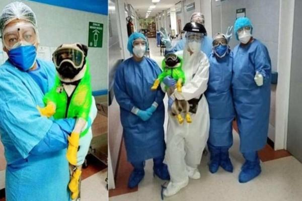 Κορωνοϊός: Ο σκύλος θεραπευτής που ανακουφίζει τους γιατρούς από το στρες