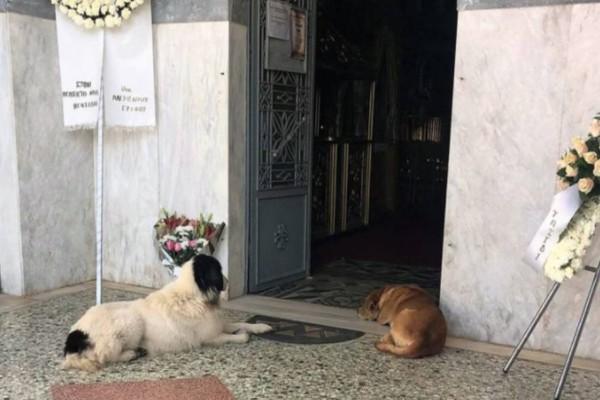 Γαργαλιάνοι: Συγκινούν τα σκυλάκια που συνόδευσαν τον άνθρωπό τους που πέθανε στην κηδεία του!