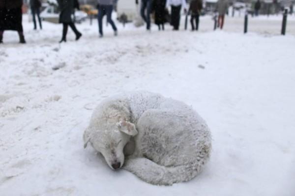Έκκληση για τα αδέσποτα ζώα στον παγετό - Αφήστε τους έστω και λίγη τροφή