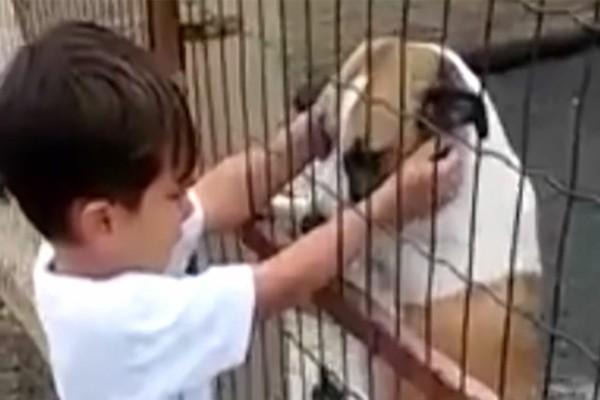 Αγοράκι συγκινείται με σκυλάκι που έχει χάσει το πόδι του και δεν μπορεί να σταματήσει να κλαίει (Video)