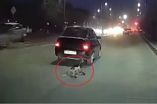 Θηριωδία: Οδηγός έσερνε σκύλο με αυτοκίνητο! (Video)
