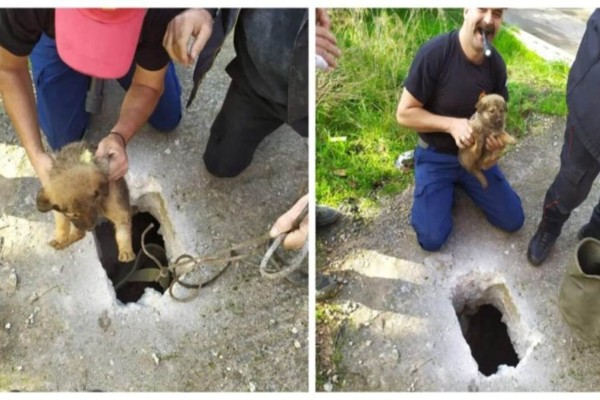 Κρήτη: Η πρώτη διάσωση της χρονιάς - Η πυροσβεστική απεγκλώβισε κουταβάκι που έπεσε σε βόθρο