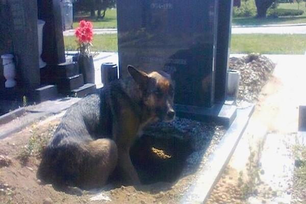 Αυτή η σκυλίτσα αρνούνταν να φύγει από τον τάφο - Περιμένετε όμως να δείτε τι είχε κρύψει μέσα