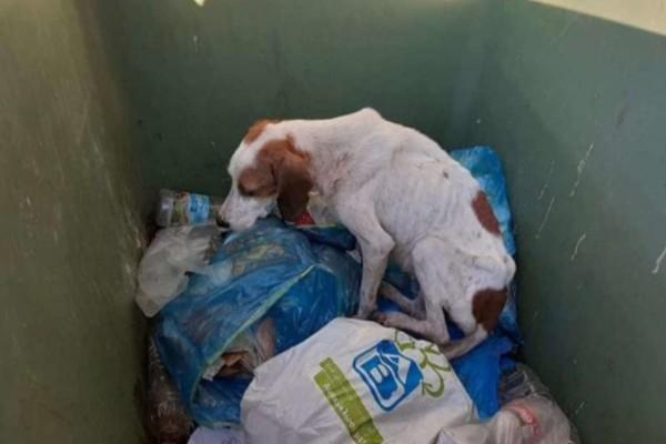 Ξεφτίλες πέταξαν άρρωστο και εξαντλημένο σκυλάκι σε κάδο σκουπιδιών (photos+videos)