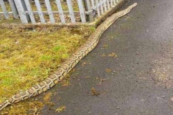 Τρόμος: Γιγάντια φίδια κόβουν βόλτες σε πολυσύχναστους δρόμους