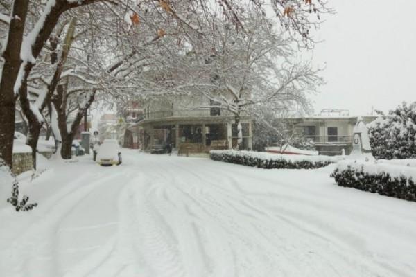Κακοκαιρία «Μήδεια»: Μέχρι στους -24.8 έπεσε η θερμοκρασία - Που σημειώθηκαν οι χαμηλότερες (photo)