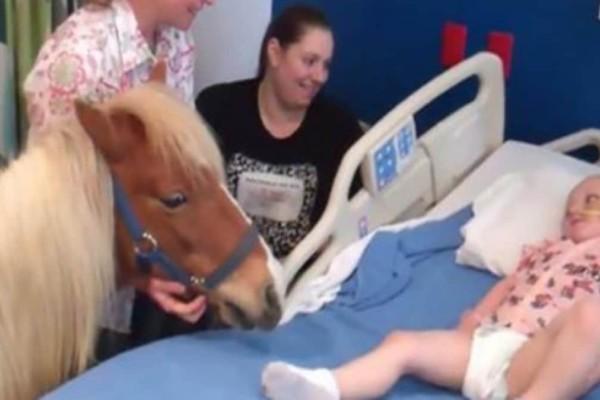 Η ευχή αυτού του άρρωστου παιδιού ήταν να δει από κοντά ένα άλογο - Δείτε τι κάνει το άλογο όταν το πλησιάζει… (Video)