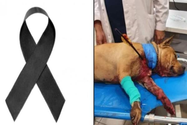 Πέθανε ο σκύλος που χτύπησαν με βέλος στην Πετρούπολη!