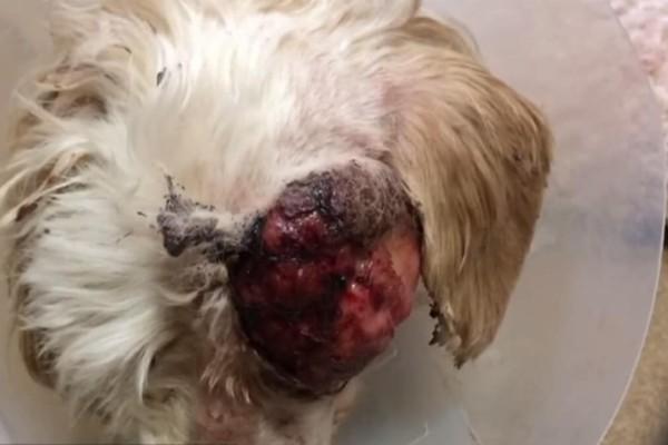 Όταν την βρήκαν ο κτηνίατρος σοκαρίστηκε τόσο που ήθελε να της κάνει ευθανασία - Λίγο αργότερα όμως έγινε το αδιανόητο! (Video)