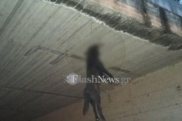 Φρίκη στα Χανιά: Κρέμασαν σκύλο από γέφυρα