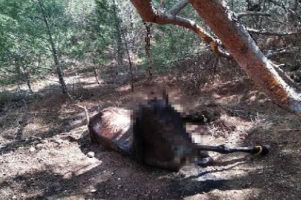 Κτηνωδία στη Λέσβο: Κρέμασαν άλογο από δέντρο
