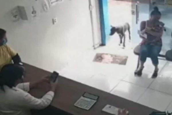 Άρρωστος σκύλος μπαίνει σε ιατρείο για να ζητήσει βοήθεια - Η αντίδραση των γιατρών συγκλονίζει (video)