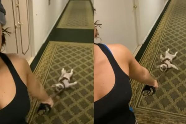 Αυτός ο σκύλος δεν θέλει να βγει καθόλου βόλτα - Ο τρόπος με τον οποίο το δείχνει θα σας κάνει να γελάσετε αρκετά (video)