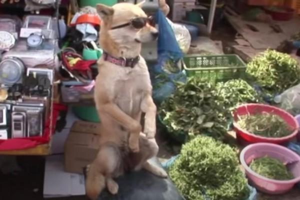 Σκύλος εντυπωσιάζει με τις ικανότητες του ως πωλητής λαχανικών - Απίστευτη η αντίδραση των περιστατικών (video)