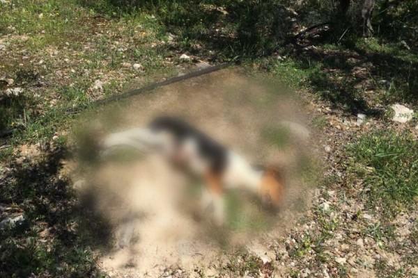 Κτηνωδία στην Κρήτη: Πυροβόλησαν και σκότωσαν σκυλάκι αφού πρώτα το βασάνισαν!