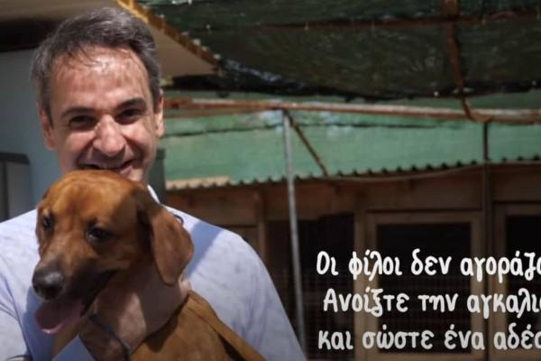 Μητσοτάκης: Επίσκεψη σε καταφύγιο εγκαταλελειμμένων ζώων με αφορμή την Παγκόσμια Ημέρα Αδέσποτων!