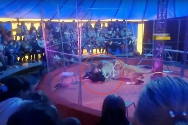 Λιοντάρι δάγκωσε εκπαιδευτή – Σοκάρουν οι εικόνες