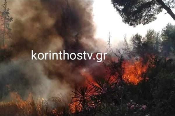 Νέα πύρινη κόλαση στην Κορινθία: Ξέσπασε φωτιά στα Ίσθμια