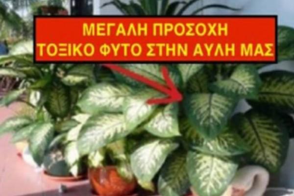 Συναγερμός: Αυτό το φυτό προκαλεί τοξική δηλητηρίαση και υπάρχει σε χιλιάδες σπίτια!