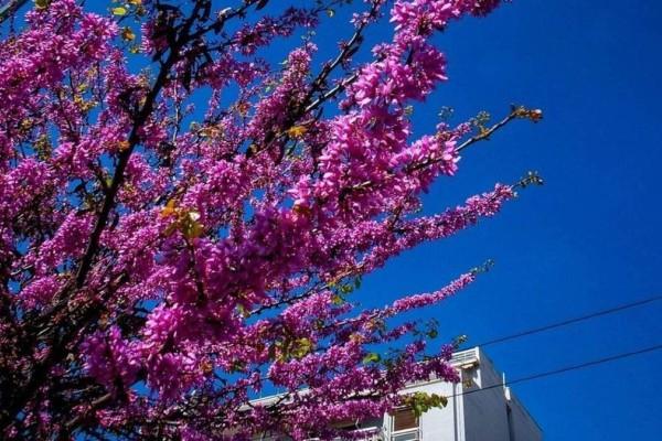 Καιρός Πάσχα: Καύσωνας και αφρικανική σκόνη