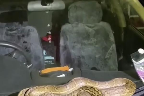 pythonas-queensland-australia