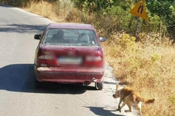 Θυμάστε τον σκύλο που έσερνε με το αυτοκίνητό του ηλικιωμένος στην Κρήτη; Δείτε πως είναι σήμερα