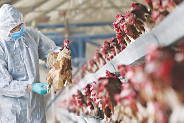 Εμφανίστηκε το πρώτο κρούσμα σε άνθρωπο του σπάνιου στελέχους της γρίπης των πτηνών