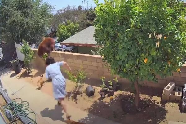 Τα έβαλε με τεράστια αρκούδα για να σώσει τα σκυλιά της