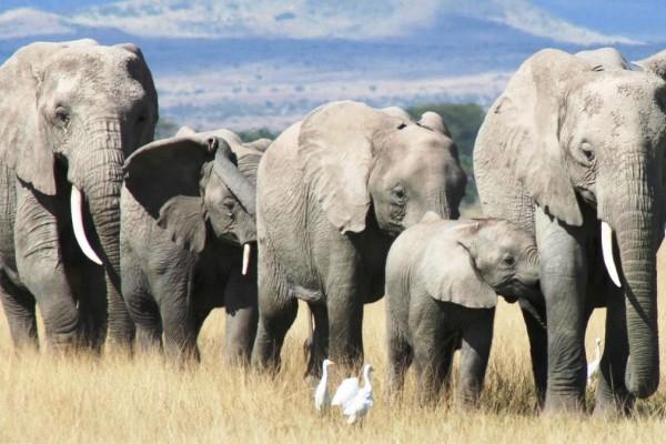 Κίνα: Kοπάδι ελεφάντων προξένησε ζημιές 1 εκατ. δολαρίων και το έριξε στον ύπνο! (vid)