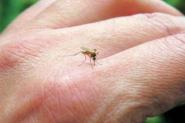 Τα κουνούπια σας τσιμπάνε περισσότερο από άλλους; Δείτε τον λόγο και τι να κάνετε για να το αντιμετωπίσετε