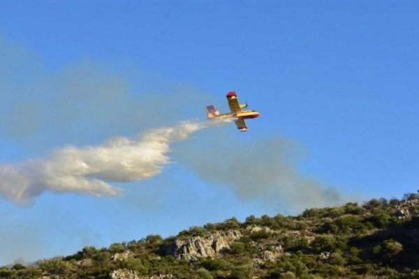 Λαμία: Φωτιά στην Καμηλόβρυση - Τέθηκε γρήγορα υπό έλεγχο