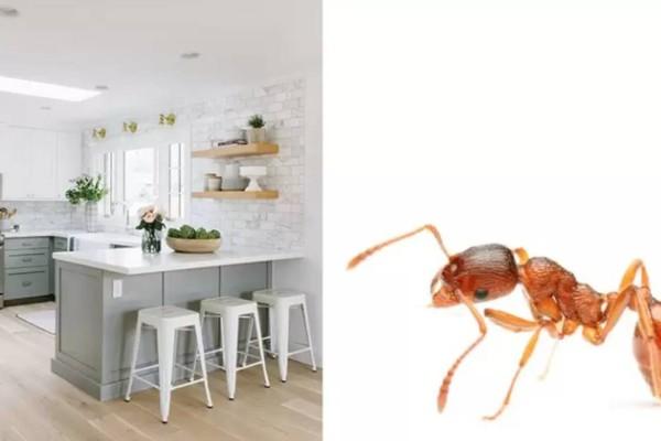 Τέλος στον εφιάλτη: Εξαφανίστε τα μυρμήγκια στο σπίτι με 10 φυσικούς τρόπους!