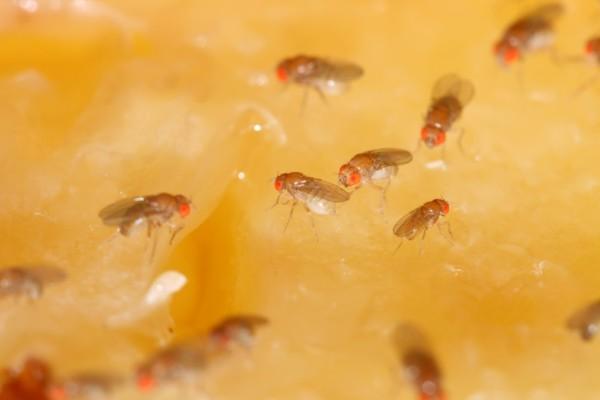 Έχετε μυγάκια στο σπίτι; 6+1 τρόποι να τα εξαφανίσετε - Τι κάνετε αν βρεθούν στο μπάνιο σας