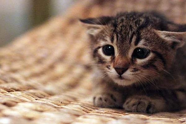 Μυτιλήνη: Ανδρας ποδοπάτησε μέχρι θανάτου ένα γατάκι