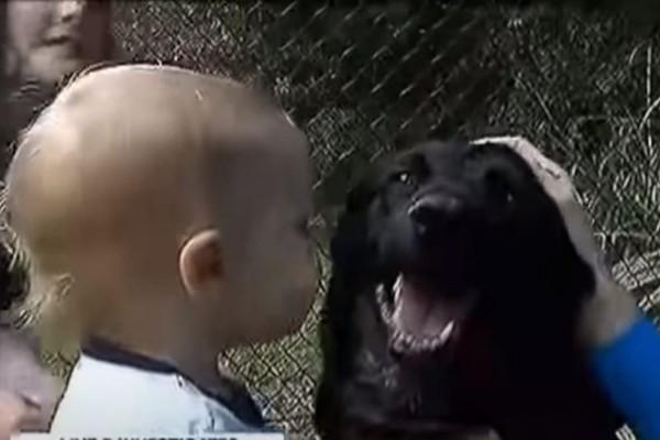 Ο σκύλος γάβγιζε στην babysitter και ο πατέρας έβαλε κάμερα - Δεν φαντάζεστε τι ανακάλυψε (video)