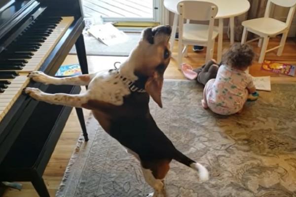 Σκύλος παίζει στο πιάνο και το κοριτσάκι χορεύει - Το βίντεο που έχει σαρώσει με 15.120.886 προβολές