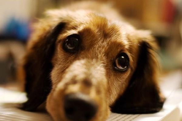 Βύρωνας: Εστειλε σημείωμα στον γείτονα του ότι θα σκοτώσει το σκύλο του, αν δεν σταματήσει να γαυγίζει