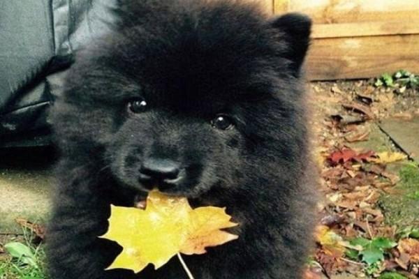 Αληθινή ιστορία: Η οικογένεια πήρε αυτό το σκύλο αλλά ο κτηνίατρος κάλεσε την αστυνομία μόλις το αντιλήφθηκε