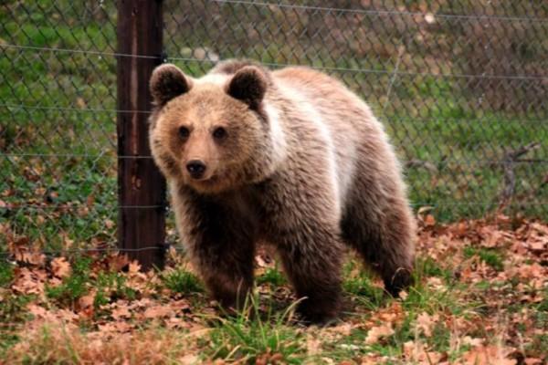 Αγώνας με μια αρκούδα: Το ανέκδοτο της ημέρας (09/07)