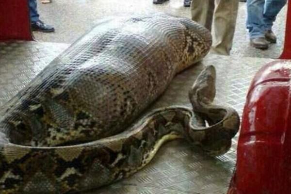 Η γυναίκα και το φίδι: Μια διδακτική ιστορία για τους φίλους-φίδια