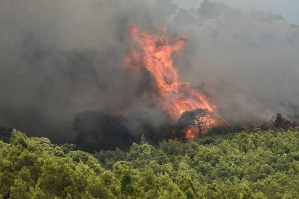 Μεγάλη φωτιά στην Κάρυστο Ευβοίας - «Κόκκινος» συναγερμός σε όλη την χώρα