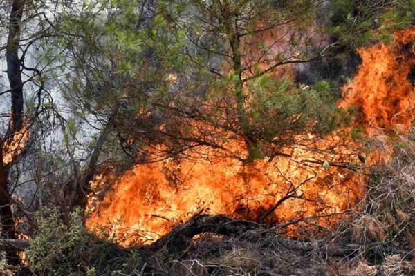 Φωτιά στην Κορινθία: Συνεχίζεται η μάχη με τη λαίλαπα - Μεγάλος κίνδυνος για πολλές περιοχές της χώρας