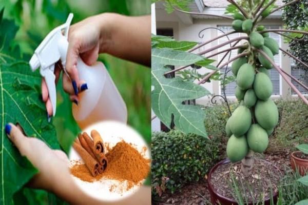 Τα μυστικά της κανέλας: Πώς την χρησιμοποιούμε στα φυτά του κήπου
