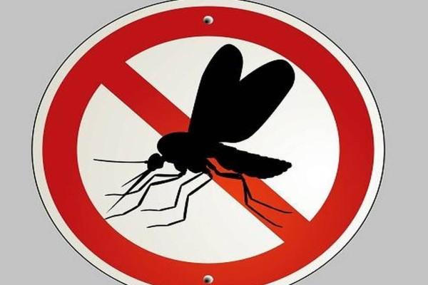Κουνούπια ΤΕΛΟΣ: Μην τρώτε αυτές τις 3 τροφές για να μην σας τσιμπάνε!