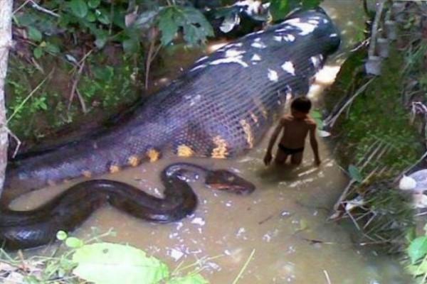 Το μεγαλύτερο φίδι που κατέγραψε ποτέ κάμερα (Βίντεο)