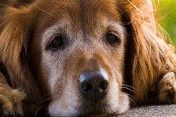 7+1 σημάδια που δείχνουν ότι ο σκύλος σας βρίσκεται στο τέλος του