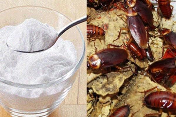Μαγειρική σόδα: Πείτε αντίο στις κατσαρίδες μια και καλή με αυτή την αποτελεσματική μέθοδο