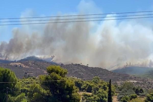 Φωτιά στην Κερατέα: Έφτασαν στις αυλές των σπιτιών οι φλόγες